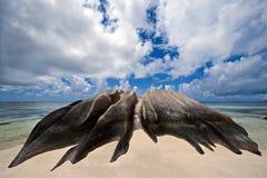 Le propriétaire de la plage Photo libre de droits