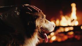 Le propriétaire frotte son chien, qui regarde le feu dans la cheminée Chaleur et confort dans le concept de maison Images stock