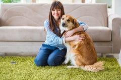 Le propriétaire heureux de chien de femme à la maison avec le golden retriever Photos libres de droits