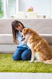 Le propriétaire heureux de chien de femme à la maison avec le golden retriever Images libres de droits