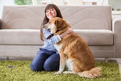 Le propriétaire heureux de chien de femme à la maison avec le golden retriever Photos stock