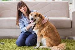 Le propriétaire heureux de chien de femme à la maison avec le golden retriever Image libre de droits