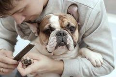 Le propriétaire prend soin des griffes du ` s de chien Photos stock