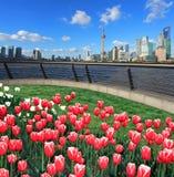 Le prospettive rosse dei tulipani di Shanghai bund il cielo del punto di riferimento della città di Lujiazui Immagini Stock