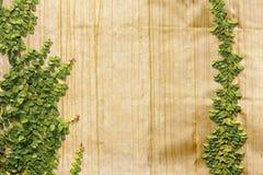 Le pumila s'élevant de Ficus goden dessus le mur Image stock