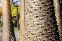Le punte taglienti degli alberi immagine stock libera da diritti