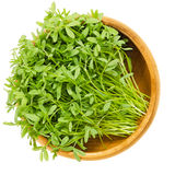 Le Puy green lentil sprouts in wooden bowl Stock Photo