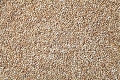 le quinoa organique sème le fond Images stock