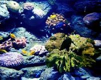 Le récif coralien à l'intérieur d'un océan est un trésor photos stock