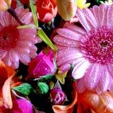 Le résumé colore les fleurs colorées d'orange de rose de bouquet de ressort de fond Photos libres de droits
