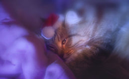 Le rêve du chat Image stock