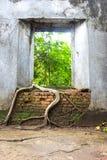 Le radici dell'albero sopraffanno le pareti del tempio antico, Sangkhlaburi Fotografie Stock Libere da Diritti