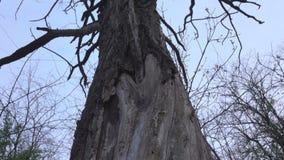 Le radici di un albero asciutto archivi video