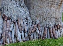 Le radici esposte assomigliano alle dita fotografie stock
