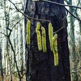 Le radici gren più forrest verde dell'albero Fotografia Stock Libera da Diritti