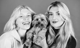 Le ragazze bionde adorano poco cane sveglio Le donne abbracciano l'Yorkshire terrier L'Yorkshire terrier è cane amoroso molto aff fotografia stock