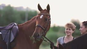 Le ragazze stanno tenendo i cavalli per le redini stock footage