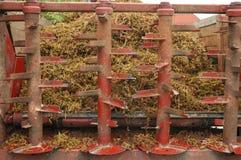 Le raisin égrappe le chariot avec des résidus d'écraser des raisins Photo stock