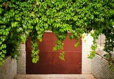 Le raisin vert part au-dessus de la vieille porte de garage comme cadre, style de vintage Photo libre de droits