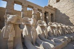 Le Ram a dirigé l'avenue des sphinx au temple de Karnak photos libres de droits