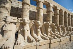 Le Ram a dirigé l'avenue des sphinx au temple de Karnak photo libre de droits