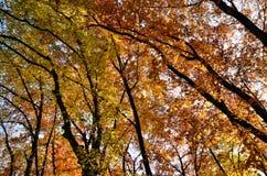 Le ramassage d'automne de couleurs Image stock