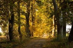 Le ramassage d'automne de couleurs Photo libre de droits