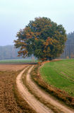 Le ramassage d'automne de couleurs HDR Photos stock