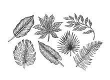 le ramassage laisse tropical Feuilles gravées de jungle Palmettes illustration libre de droits