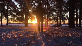 Le randonneur avec le sac à dos marchant dans la forêt de pin a couvert de neige profonde fraîche au coucher du soleil Vue d'angl clips vidéos