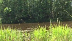 Le rane gracchiano dal lago nella foresta archivi video