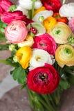 Le RANUNCULUS BULBOSUS, jaillissent groupe de fleurs coloré, femmes jour concept de carte postale du 8 mars Photographie stock libre de droits
