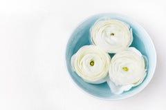 Le ranunculus de flottement blanc fleurit la vue supérieure de l'espace de copie de fond de bien-être de station thermale Photographie stock