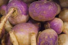 Le rape organiche fresche fanno i colori vibranti nel mercato dell'isola di Vancouvers Grandville Immagine Stock Libera da Diritti