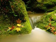 Le rapide sulla piccola torrente montano fra il basalto muscoso oscilla Acqua vaga che investe le pietre Fotografia Stock Libera da Diritti
