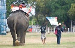 Le rassemblement annuel d'éléphant dans Surin, Thaïlande Photos stock