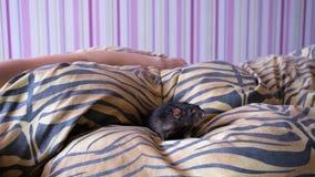 Le rat domestique marche sur la couverture La fille de l'adolescence dort sur le lit banque de vidéos