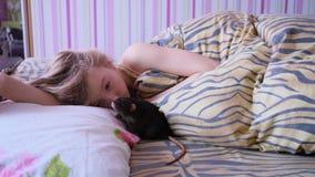 Le rat domestique marche sur la couverture La petite fille jouant avec un raton le lit banque de vidéos