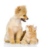 Le regard de chien et de chat à l'un l'autre. Photos stock