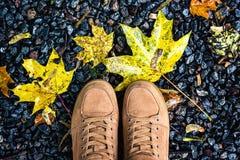 Le regard en bas des chaussures de brun de paires tenant l'érable jaune humide de chute au sol laisse le mode de vie extérieur Fa Photo libre de droits