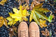 Le regard en bas des chaussures de brun de paires tenant l'érable jaune humide de chute au sol laisse le mode de vie extérieur Fa Photographie stock libre de droits