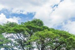 Le regard par l'arbre part au ciel bleu avec les nuages blancs images libres de droits