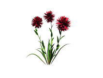 le rendu 3d du buisson de fleur d'isolement sur le blanc peut être employé pour les FO Images libres de droits