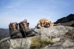 Le repos de golden retriever dans la roche Photographie stock