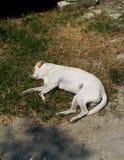 Le repos et la prise de chien les prennent un bain de soleil sur l'herbe images libres de droits