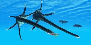 Le reptile de Styxosaurus chasse des poissons de Coelacanth Photographie stock