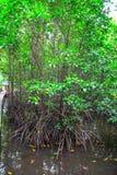 Le resot de forêt de palétuvier dans la province de kong de KOH au Royaume du Cambodge près de la frontière de la Thaïlande Photo stock