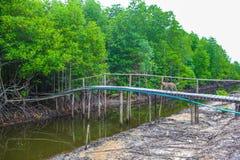 Le resot de forêt de palétuvier dans la province de kong de KOH au Royaume du Cambodge près de la frontière de la Thaïlande Images libres de droits