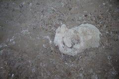 Le ressembler en pierre au coeur blanc Photo libre de droits