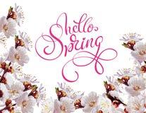 Le ressort blanc fleurit une branche et un ressort des textes bonjour Lettrage de calligraphie Photographie stock libre de droits